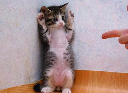 手を上げろ