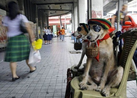 レゲエ犬w